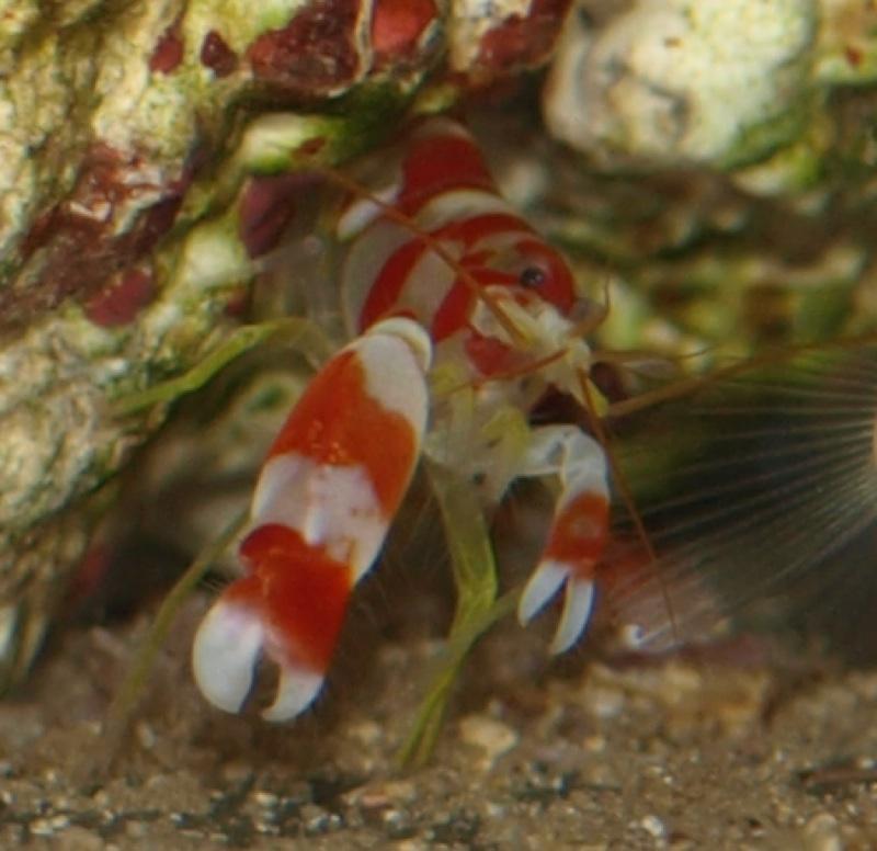 What Do Shrimp Eat?
