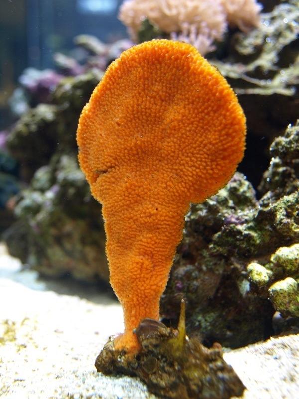 Orange Paddle Sponge