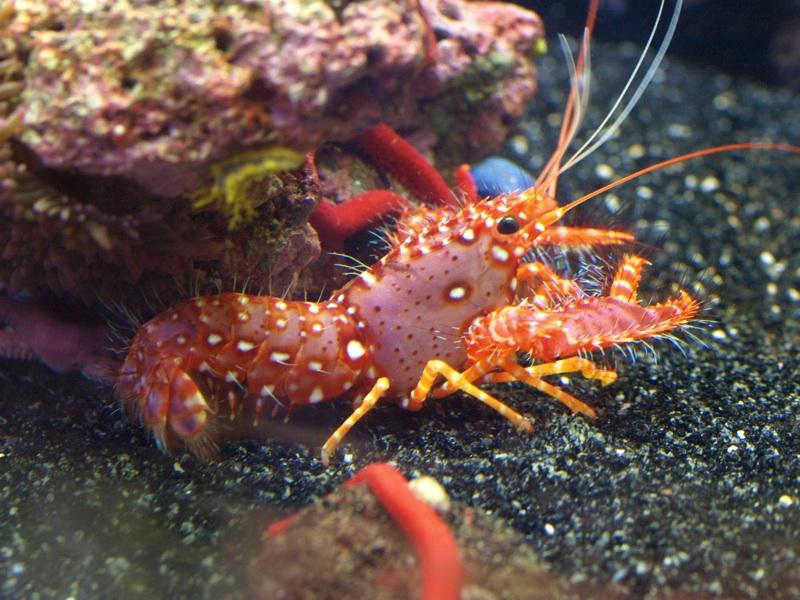 Phylum Arthropoda Class Crustacea Characteristics Phylum Arthropoda Class